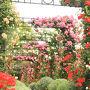 ハウステンボスのバラ祭り