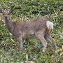 鹿に「ナニしに来たのアンタ?」って言われているような気が しますが、この日は過密スケジュールだったので先を急ぎます。