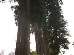 清神社(すがじんじゃ)  かつては祇園神社と呼ばれていたそうです。  このすばらしい杉は樹齢700年らしい。
