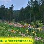 「谷汲ゆり園」は『日本のゆり園ベスト5』(2015)