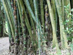 群生している竹林は迫力がありました。
