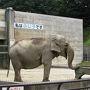 岡崎市動物総合センター・Animo  ここは無料のちいさな動物園ですが、なぜかゾウのふじ子さんが 一枚看板背負ってます。  手前の装置で、おやつをたぐり寄せてパクッ。