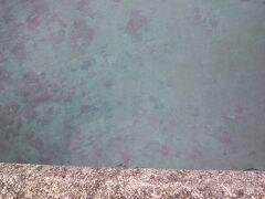 あら、水は綺麗な青色なのね。 ホントキレイ。 これを見るためだけに奄美に行く価値あります。