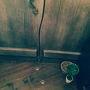 """猫カフェファンタジー♪""""てまりのおうち"""" in 吉祥寺 & 今は無き""""ねこカフェクラブ/マーサスミス"""" in 自由が丘"""