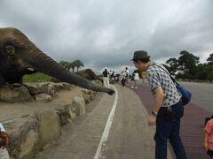 恐るおそる、ゾウに餌をやってみます。