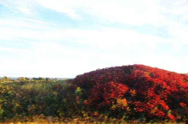 秋の彩 カナダ 10日間