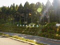高野龍神スカイライン  ドライブイン花園あじさい園(標高1040m)  まだ、アジサイが咲いてます!