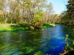 蓼川と万水川。 この二つの川は水源が異なるため、しばらく混ざり合うことなく流れていきます。 水草もそよそよと水中を揺らいでいます。 とっても綺麗な水です。