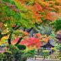 この光景から緑が多く黄色が少ない 紅葉最盛期の直前かな?