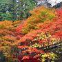 2015紅葉(3) 紅葉の名所・両界山横蔵寺&谷汲山華厳寺