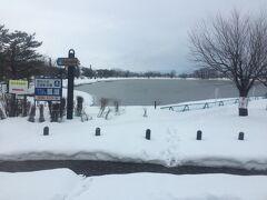 白鳥で有名な瓢湖を左に 沢山何か浮いてるな、と思ったら白鳥だった 3000羽ぐらい来ているらしい