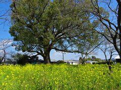 『記紀の道』の「無戸室(うつむろ)」は,きれいな花園でした  ※ 西都原古墳群や『記紀の道』については,一般財団法人 みやざき公園協会のサイトが詳しいです http://mppf.or.jp/saito/map/