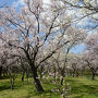 山田池公園で花を愛でる
