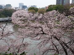 千鳥ヶ淵もほぼ満開の桜。
