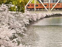 大川沿いには見渡す限りの桜満開の風景が延々と続いていました、これは素晴らしい!\(^o^)/
