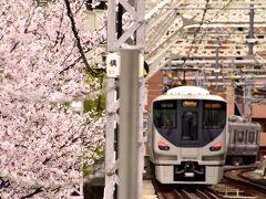 桜ノ宮駅に降りるとホームの先には見渡す限りの綺麗なピンク色の風景が早速お目見えです 流石、駅名に偽り無し!でありますよねw