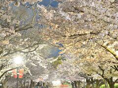 大阪城公園の桜並木もとても見事なものでして、この絶景空間にしばし酔いしれる素敵なひとときでありましたw