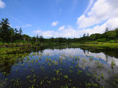 湿原の奥に静かに佇んでいた神仙沼。 ニセコ周辺で最も美しい沼だそうだ。 沼の中に水草が映えていて、それが良いアクセントになっていた。 映り込んだ周りの木々も沼を飾っているようだ。 神や仙人が住んでいるような景色。 確かにそんな感じがする。