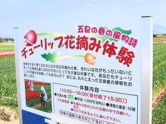 お昼ころ五泉市のチューリップ祭り会場( http://www.city.gosen.lg.jp/kanko/guide/000206.html )に到着。