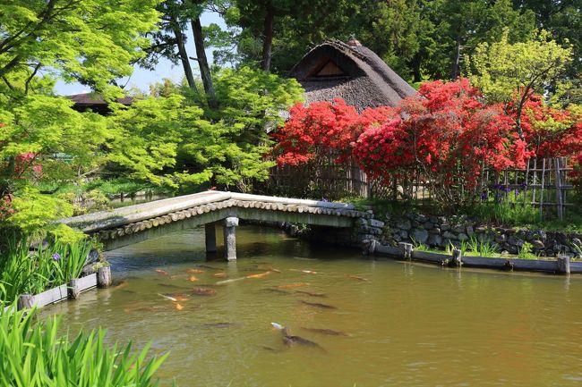 京都を歩く(241) 初夏を彩る花々 梅宮大社の躑躅,西院春日神社の藤