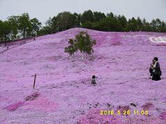 実は、ここが施設研修をぬかして、い ちばんの目的地!  東藻琴芝桜公園