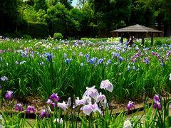 入園料は大人500円。 HPによると「約8、000?の面積に約200種類、約20,000株の花しょうぶが咲き誇ります。6月中旬以降は、あじさいも楽しめます」とのこと。  「染谷花しょうぶ園」 http://www.someyahanashoubuen.com/