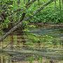 久しぶりの明神池 池に映った 緑 惹かれます ♪