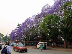 """7時10分、カトマンドゥにおける貴重な緑地帯、""""ラトナ・パーク""""(Ratna Park)に到着。  ラトナ・パークではこの季節、紫色の花を咲かせるジャカランダが満開で、土色のカトマンドゥの街並みにあって、唯一といってもいいほどの彩りを添える貴重な存在となっています。"""