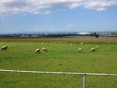 午後は羊ヶ丘展望台に行ってみました。