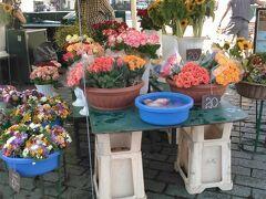 旧市街の中央広場にはお店がいくつも出ています。 花屋さん 持って帰れるなら買いたかった。