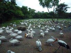バンコクサファリワールド入園 鳥の楽園