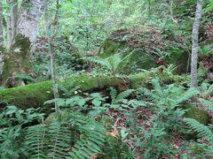 序盤はシダに包まれた森の風景が続きます。
