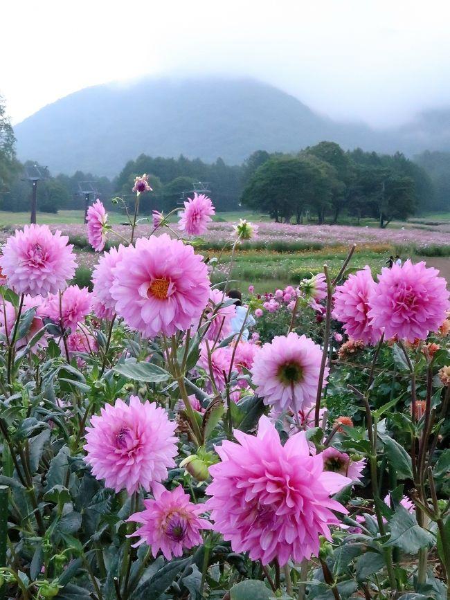 黒姫高原2/2 ダリア園 華麗に咲いて ☆品種名に納得させられ