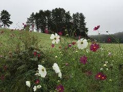 中山高原のそば畑に行ってみる。そばの白い花にコスモス。