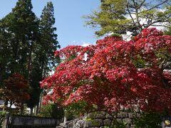 輪王寺周辺です。これは完全に紅色!! ふぅ~~♪うれしい~~♪  これからまだまだたくさんの紅葉に出逢うのかもしれないけど、噛り付くように撮りました(*^m^)