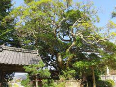 妙青寺を散歩。
