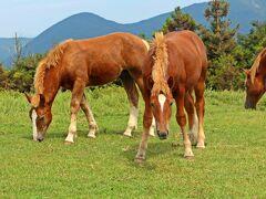 そして、この展望所にも馬が多数。