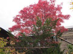 線路跡づたいにぶらぶら秋見つけ!