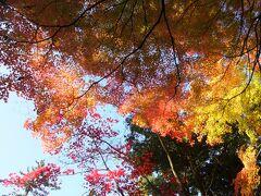 このあたりの紅葉がきれいでした。