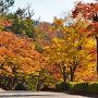2016紅葉(2) 水面に映る「逆さ紅葉」・曽木公園の紅葉