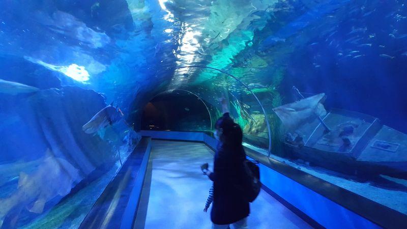 SEA LIFE釜山アクアリウム