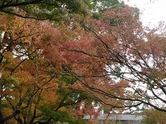 続いて竈門神社へ。 石段が続きます。紅葉しています。