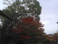 一番紅葉していた木