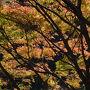 大阪府民の森・ほしだ園地に遊ぶ