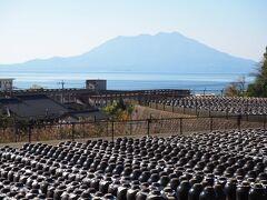 次にやって来たのは、坂元の黒酢 「壺畑」。 この辺りはお酢の生産が盛んなようで、こんな風に壺がずらーっと並んでいる場所が他にもありました。 壺畑と後ろに見える桜島の景色は鹿児島らしくて素晴らしいです。  相方はなぜかお酢にすごく興味を示して (焼酎じゃないんだ…) 売店で結構いい値段の3年熟成黒酢やらりんご酢をお買い上げ。どうも尿酸値が下がる的な謳い文句に惹かれた様子。