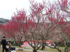 """「南部(みなべ)梅林」  この日(2/18土曜日)は『梅まつり』開催中、、 http://www.aikis.or.jp/~minabe/event/kanbai/minabe.html  午後2:30~ """"もち投げ""""も行なわれていました、、 残念ながら、2度の渋滞に遭ったkuritchi達 到着が午後2時半過ぎてしまい 残念、、  朝どれの新鮮な大根(お土産に購入・美味しかった♪)や 梅の苗などが売られていたりと、、 梅林入口まで露店が並んでいて お店をのぞきながら坂道を てくてく、、"""