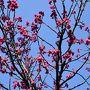 二ヶ領用水 春の花チラホラ 2017(川崎市中原)