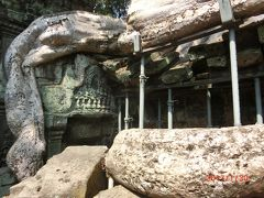 アンコールトムの北大門を出て一度マイクロバスに乗り、 タ プローム Ta Prohm に来ました。 これもジャヤバルマン七世が建立した母親の為の仏教寺院です。