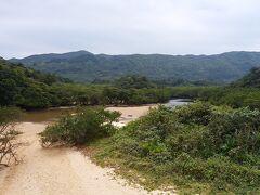 吹通川のヒルギ林