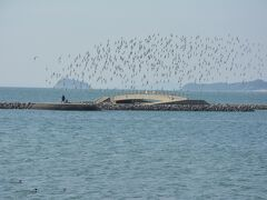 鳥もたくさんいて、カラスやとんびもけっこういました。